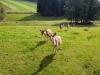 erlau-wanderweg_06