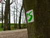 BA_Michelsberger-Wald-6