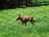 Tierfreigehege_12