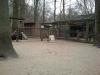 wildpark-sw_20_0