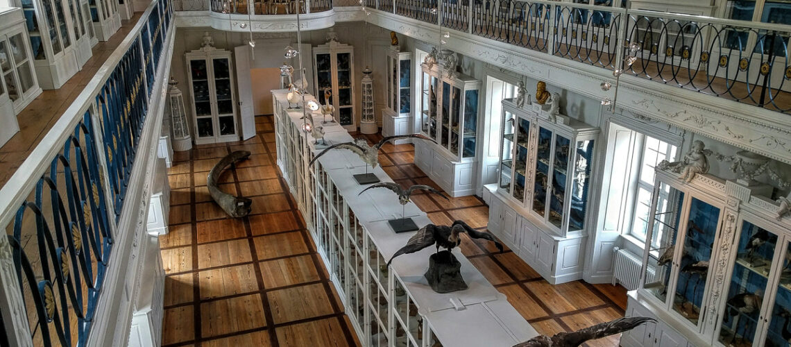 Vogelsaal im Naturkundemuseum